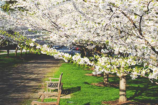 Gardening With Spring Trees And Shrubs